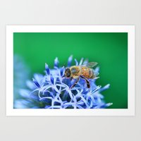 Bee & Flower Art Print