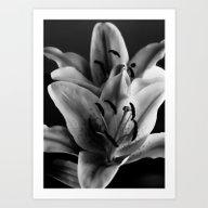 A Portrait Of A Lily Art Print