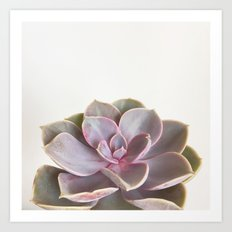 Purple Succulent Art Print