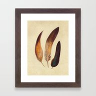 Three Feathers  Framed Art Print