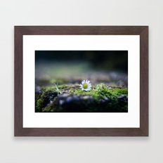 Just a Daisy Framed Art Print