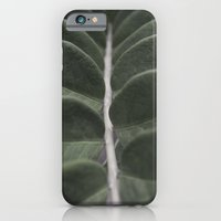 iPhone & iPod Case featuring Money Plant by David Taylor