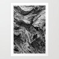 1046017 Dead Wood Art Print