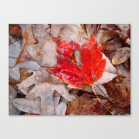 Autumnal Reverie 657 Canvas Print