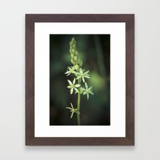 Green nature in the darkness Framed Art Print