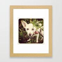 Looking Lobo Framed Art Print