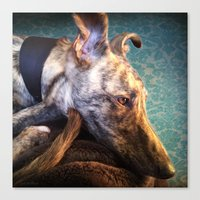 Greyhound Lurcher Canvas Print