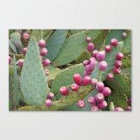 Desert Fruit Canvas Print