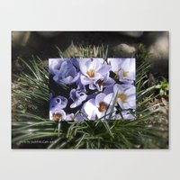 Conjuring The Crocuses I… Canvas Print