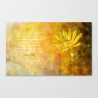 Canvas Print featuring  Yellow Daisy (Euryops) by Fine Art By Rina