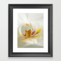 Looking Into The Orchid Framed Art Print