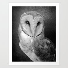 Wisdom Barn Owl  Art Print