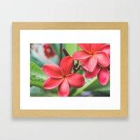 Soft Summer Plumeria Framed Art Print