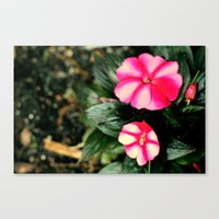 Pink/Purple Flower Canvas Print