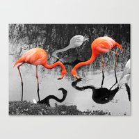 Matthew Cole Photography Canvas Print