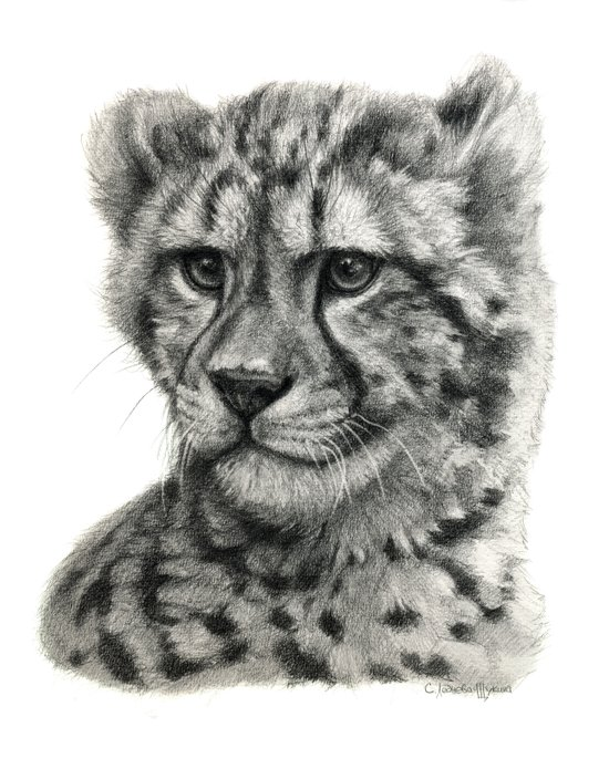 Young Guepard g094 Art Print