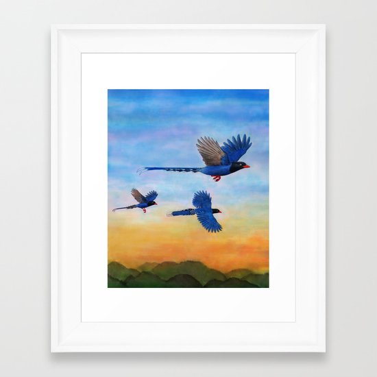 Taiwan Blue Magpies (2) Framed Art Print