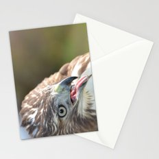 Red Tailed Hawk Close Up Stationery Cards