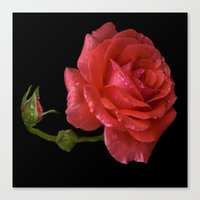 For Rose Canvas Print