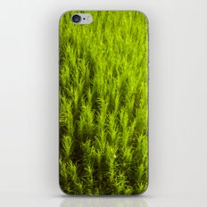 Mini Forest iPhone & iPod Skin