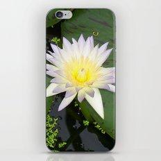 Cream Waterlily iPhone & iPod Skin