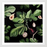 Figs Black Art Print