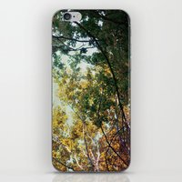 Forest 015 iPhone & iPod Skin