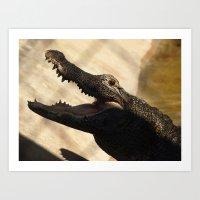 Alligator Smile Art Print