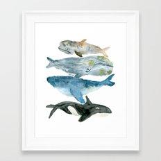 Whale, Whale, Whale Framed Art Print