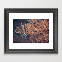 Pine Needle Framed Art Print