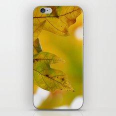 Yellow Autumn Leaves 1 iPhone & iPod Skin