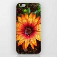 The Flower Sun iPhone & iPod Skin