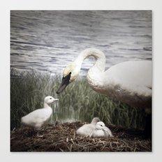Tom Feiler Swan and her Cygnets Canvas Print