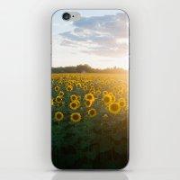 Sunflower Day iPhone & iPod Skin