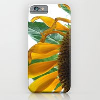 iPhone & iPod Case featuring Sunflower by Stacy Frett