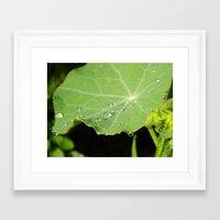 Morning Nasturtium Framed Art Print