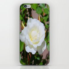 Best of Show, White Rose iPhone & iPod Skin