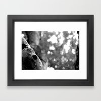 Catcher  Framed Art Print