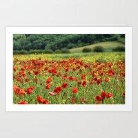 Poppies, Poppies, Poppie… Art Print
