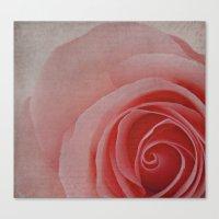 Sweet Roses Canvas Print