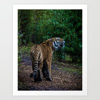 A Tigers Roar Art Print