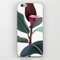Ficus Elastica iPhone & iPod Skin