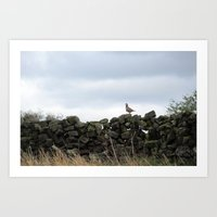 Partridge on a Wall Art Print