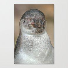 Sleepy Young Penguin Canvas Print