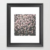 Black background Pink Shidare Zakura Framed Art Print