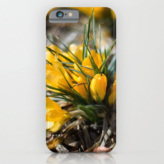 Sunlit Crocus iPhone & iPod Case