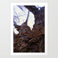 Fungi on the apricot tree Art Print