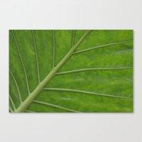 Elephant Ear Leaf Canvas Print