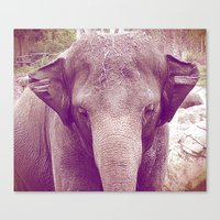 Elephant. Canvas Print