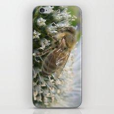 little bee XI iPhone & iPod Skin